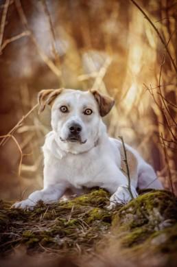 True Creative Agency - Hundefotografie