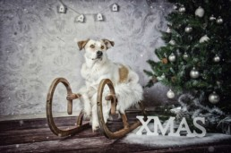 True Creative Agency - Hundefotografie
