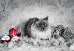 True Creative Agency - Katzenfotografie
