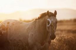 True Creative Agency - Pferdefotografie